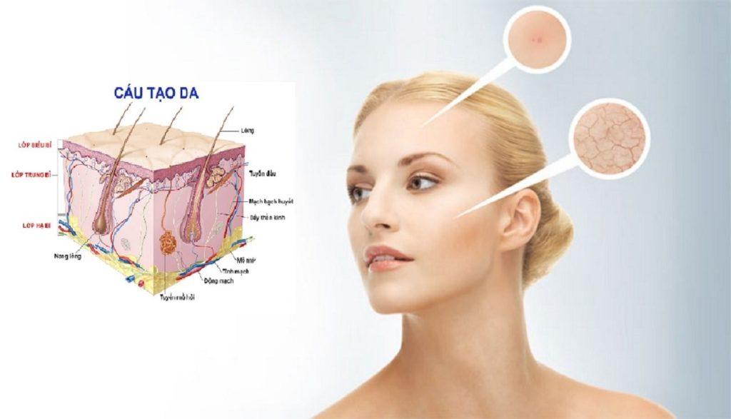 Cấu tạo thành phần da